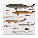 Deep Sea Sharks School 2 c Tile Coaster