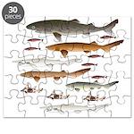 Deep Sea Sharks School 2 c Puzzle