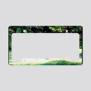 Terawera-Falls-River-183-14 License Plate Holder