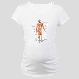 Muscles anatomy body Maternity T-Shirt