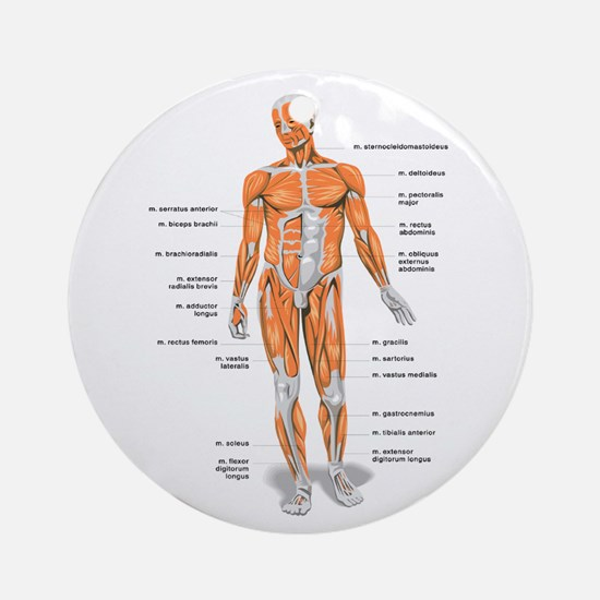 Muscles anatomy body Ornament (Round)