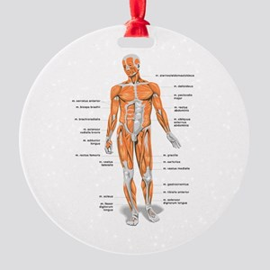 Muscles anatomy body Ornament