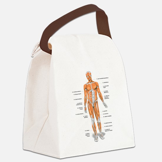 Muscles anatomy body Canvas Lunch Bag