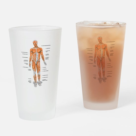Muscles anatomy body Drinking Glass
