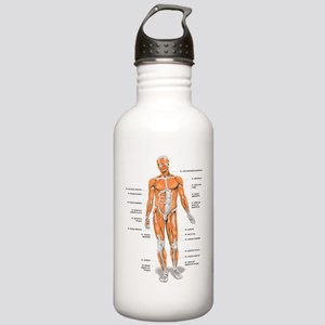 Muscles anatomy body Water Bottle