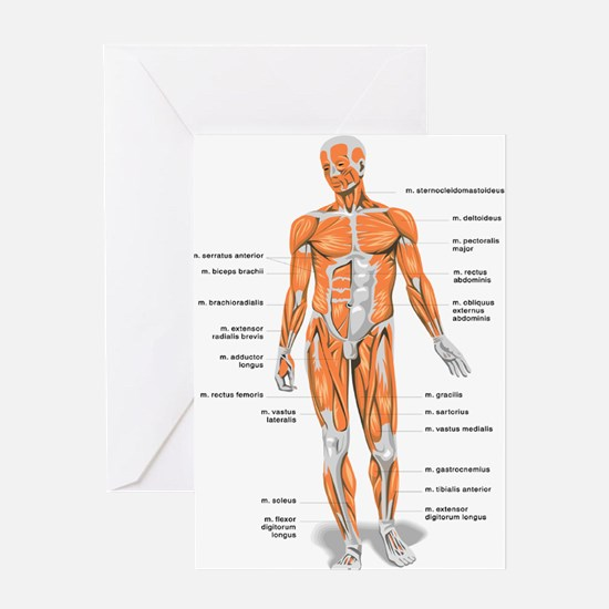 Muscles anatomy body Greeting Cards
