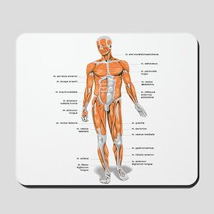 Muscles anatomy body Mousepad
