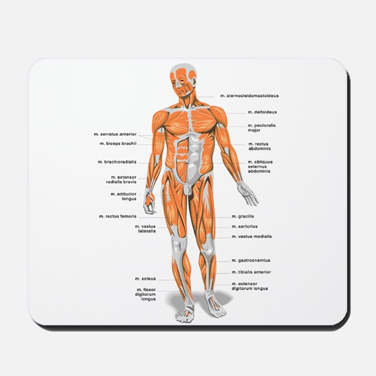 Muscles anatomy body Mousepad
