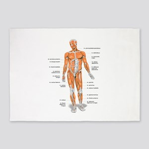 Muscles anatomy body 5'x7'Area Rug