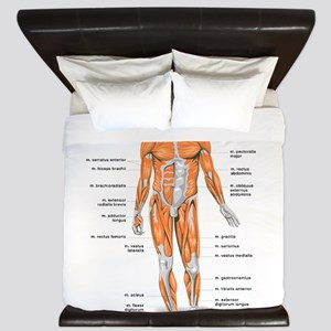 Muscles anatomy body King Duvet