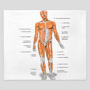 Muscles anatomy body King Duvet