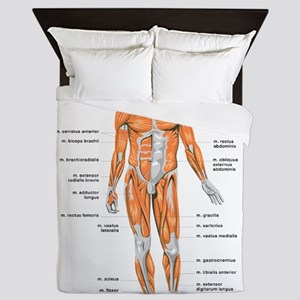 Muscles anatomy body Queen Duvet