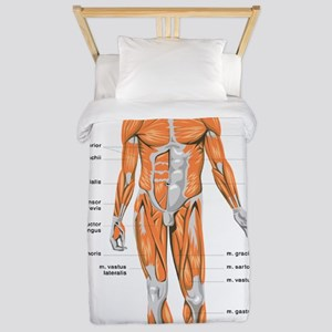 Muscles anatomy body Twin Duvet