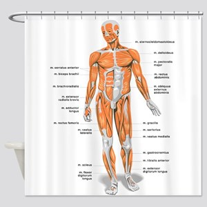 Muscles Anatomy Body Shower Curtain