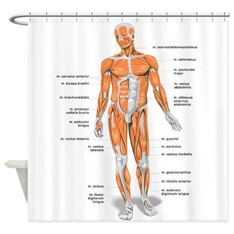 Great Muscles Anatomy Body Shower Curtain