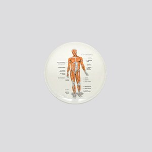 Muscles anatomy body Mini Button