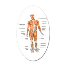 Muscles anatomy body Wall Decal