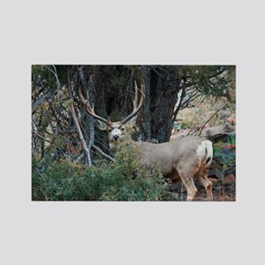 Mule deer spur buck Rectangle Magnet