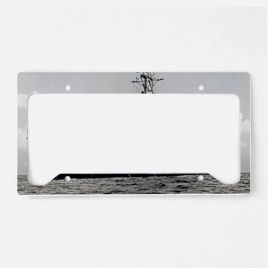 wren postcard License Plate Holder