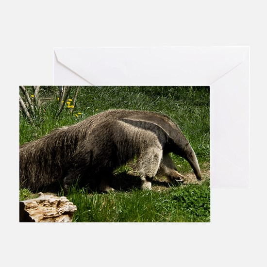 (4) Giant Anteater Greeting Card