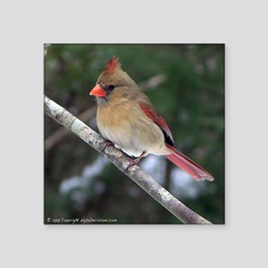 "Female Cardinal Square Sticker 3"" x 3"""