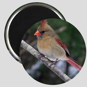 Female Cardinal Magnet