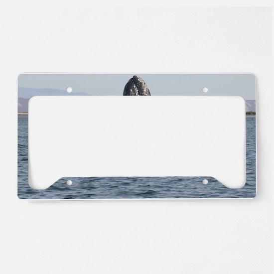 spyhop License Plate Holder