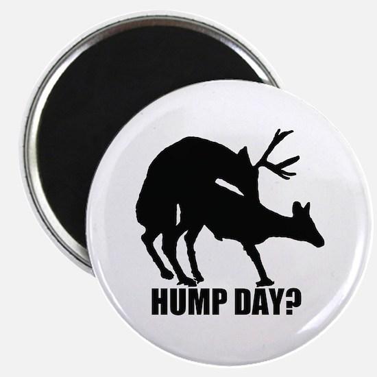 Mule deer hump day Magnet