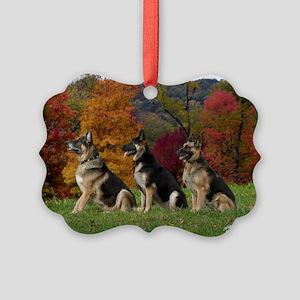 CRW_6649-abeee Picture Ornament