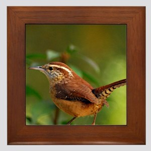 Carolina Wren DSC_0103 132 Framed Tile
