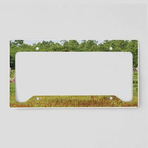 IMG_2030 License Plate Holder