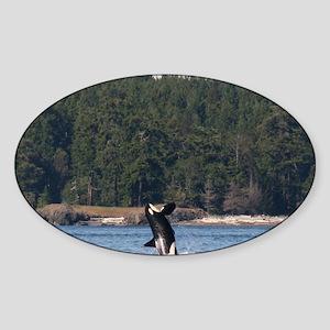 orca-MP Sticker (Oval)