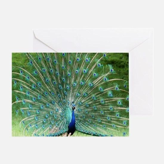 peacock-MP Greeting Card
