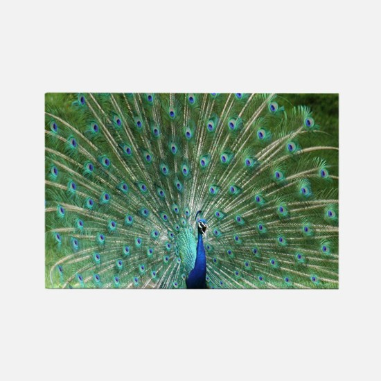peacock-MP Rectangle Magnet