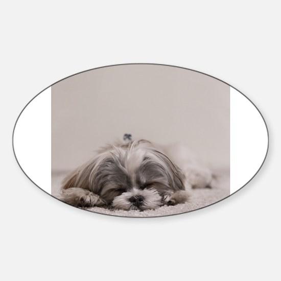 Shih Tzu Puppy Rests Decal