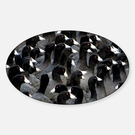 Helaine's Coots Sticker (Oval)