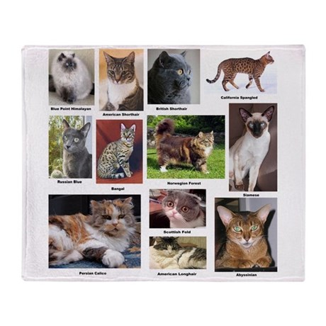 Cat Breed Full Color Throw Blanket