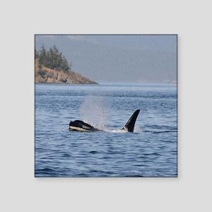"""orca-Cstr Square Sticker 3"""" x 3"""""""