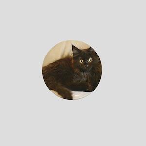 black-smoke-maine-coon-kitten1 Mini Button