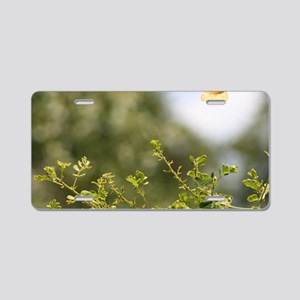IMG_5330 Aluminum License Plate