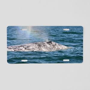 3-IMG_3491 Aluminum License Plate