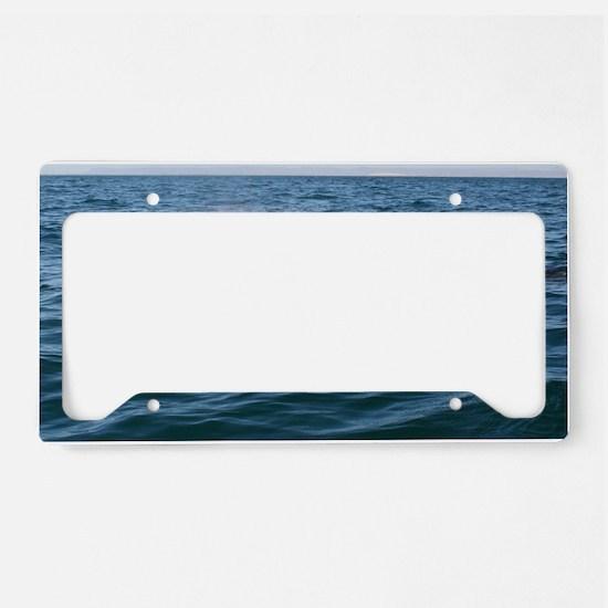 2-IMG_2663 License Plate Holder
