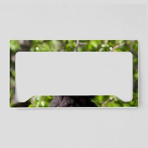 _FDW8477 edit 2 4x7 License Plate Holder