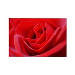 Red Rose Rectangle Magnet (10 pack)