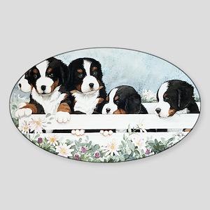 Bernese Five in a Box Sticker (Oval)