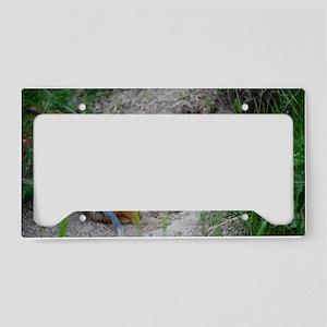 DSC_0009_6 License Plate Holder