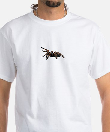 A spider on a White T-Shirt