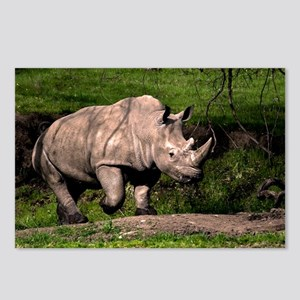 (6) Rhino on Hill Postcards (Package of 8)