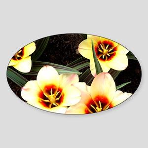 Girlfriend flowers at Keukenhof Sticker (Oval)