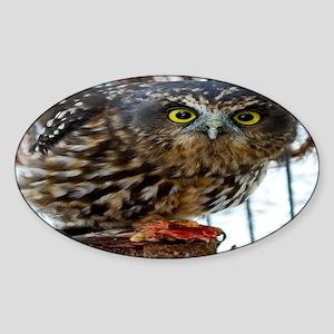 3335-ruru-stare-aw-2700x211 Sticker (Oval)